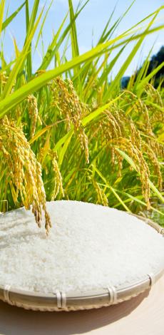 おいしいおかずには欠かせないごはん。きさらぎのお米。